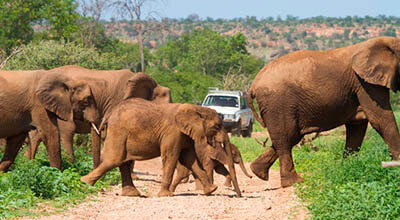 mopane_atractions_MAPUNGUBWE_safari