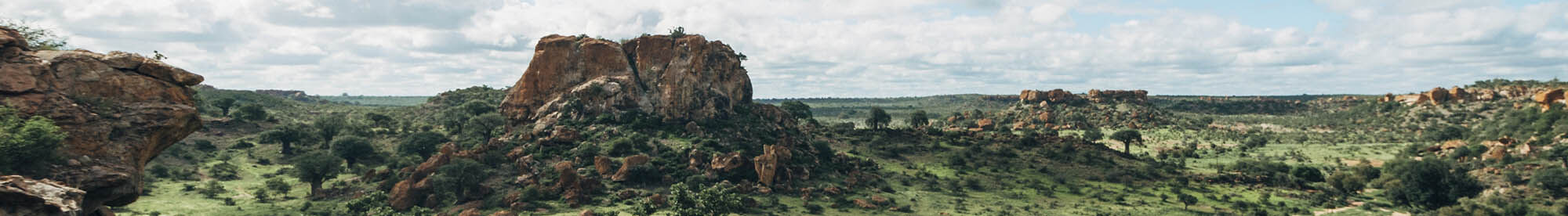 mopane_southafrica